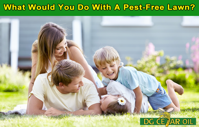 Get Rid Of Pests On Your Lawn – Without Killing Your Grass