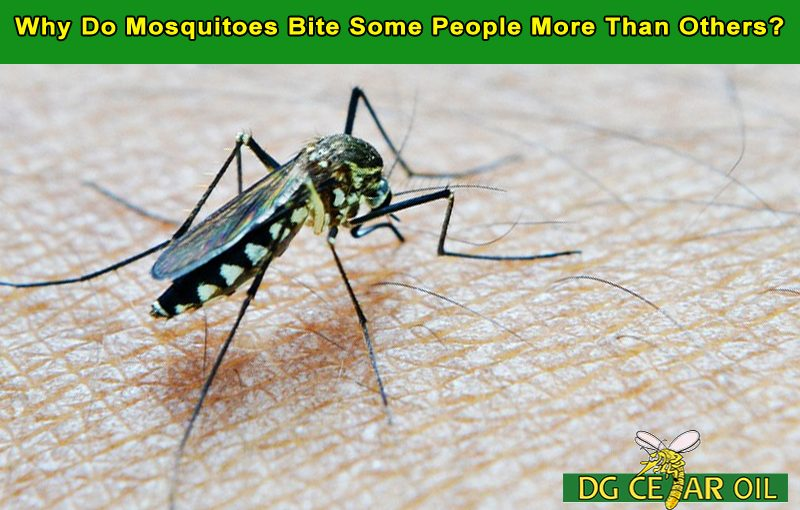Why Do Mosquitoes Bite Some People More Than Others?